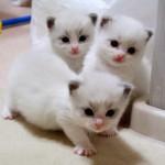 子ネコがおやつアピール、スクッと立ちます!【動画】