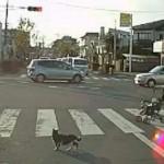 """【危機一髪】道路で立ち往生してしまった""""子猫""""を助ける女性バイカー"""