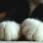 「猫の手」の借りどきが今ハッキリとわかる! 10秒動画
