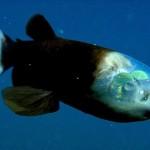 【珍魚】不気味で怖い深海魚