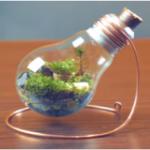 電球やボトルのなかに小さな庭が!ミニ「テラリウム」がとっても素敵!